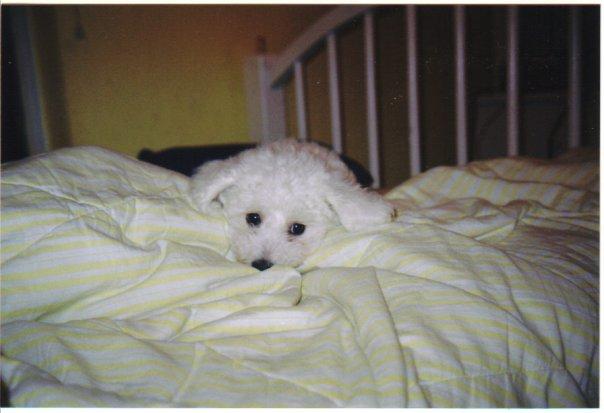 Fleuree's Puppyhood